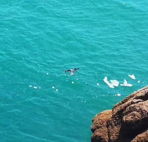 Pingouin_animaux