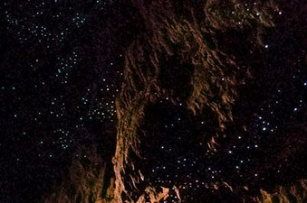 glowworms_animaux