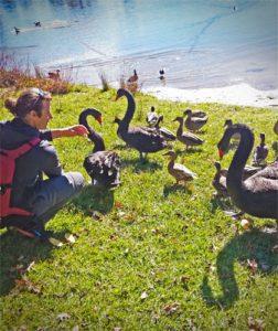 oiseaux_animaux