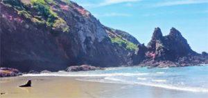 Allans-beach_peninsule_otago
