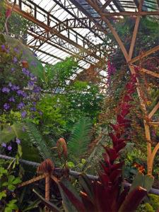Botanical_Christchurch